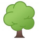 arbre,sapin,planter,bois,foret